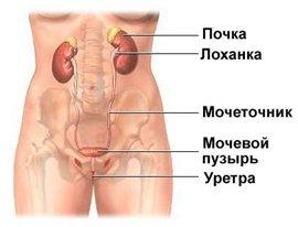 Аномалии развития верхних и нижних мочевых путей